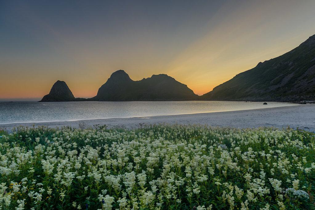 Sommer i Sandviksbukta
